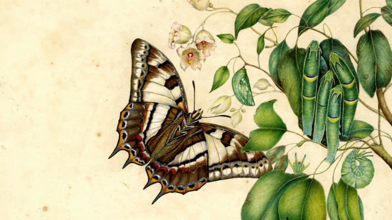 Tailed emperor butterfly (detail) by Helena Scott.