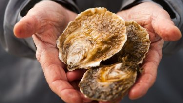 Farmed angasi native oysters from Port Phillip Bay.
