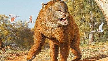 An artist's impression of the diprotodon, a rhino-sized wombat-like megafauna.