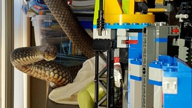 Snake catchers Brooke and Tony Harrison caught this snake in a child's play area in Tallebudgera, on the Gold Coast.
