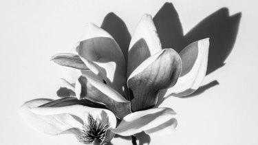 My Flower Man x Laura Goodall print.