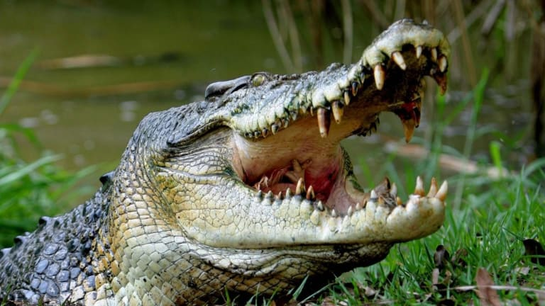 Climate change will impact crocodilian populations, an expert says.
