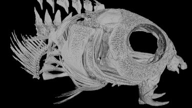A CT scan shows the prominent fangs of the fang blenny fish.