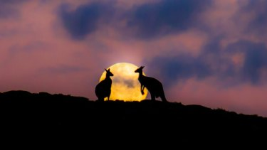 Sean Blocksidge's Sunset Kangaroos snap took out first prize in a national photography competition.