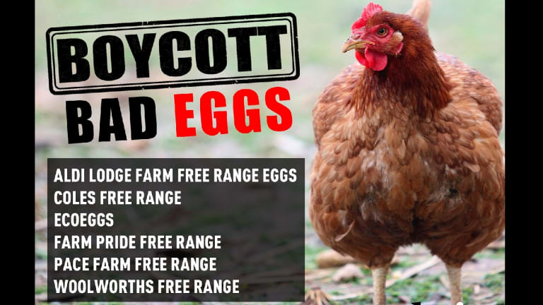Choice is calling for a boycott of certain brands and has launched an augmented-reality app CluckAR.