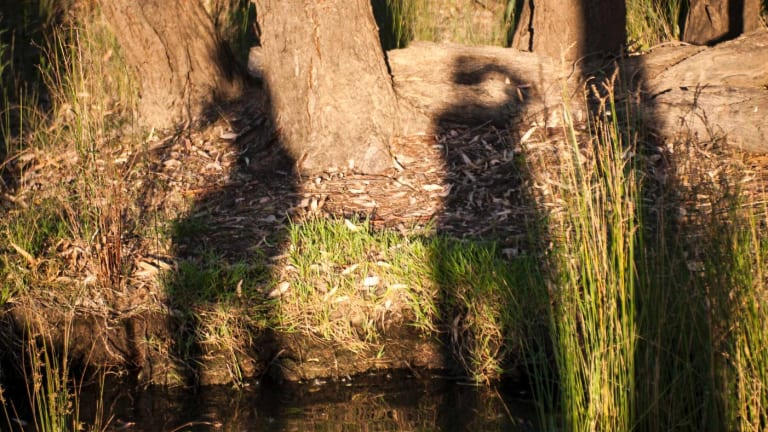 Shadows of Alan Lee (l) and Jonquil Mackey (r) at Five Mile Bend near Narrandera.