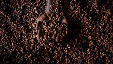 Jasper and Myrtle Chocolates in Canberra is using cocoa beans from Bougainville