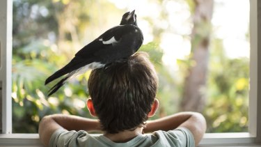 A magpie named 'Penguin' was welcomed into the Bloom family.