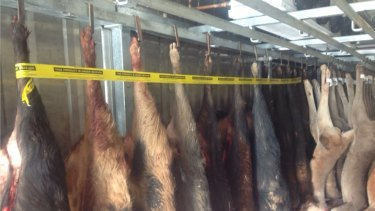 Eighteen seized wild boar carcasses that were lacking official identification leg tags.