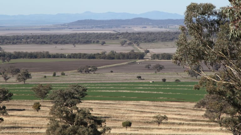 Liverpool Plains are home to some of Australia's - if not the world's - richest soil.