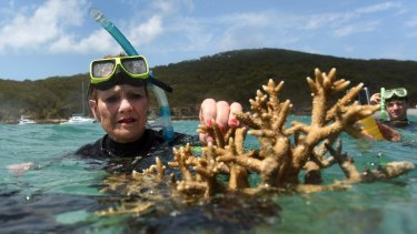 One Nation Senator Pauline Hanson assesses some coral near Great Keppel Island.