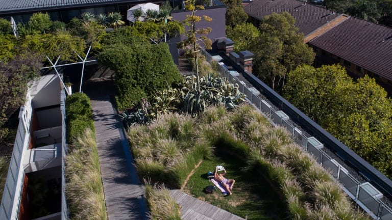 A resident of the M Central apartment complex, in Pyrmont, sunbakes on the building's green roof.