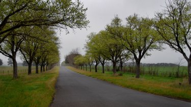 The 22-kilometre WWI avenue of honour in Ballarat includes 3771 trees.