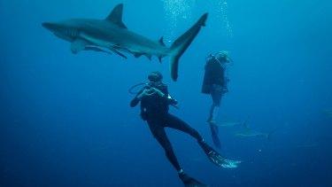 Karina Holden's new documetary, Blue, addresses the issue of Ocean Change