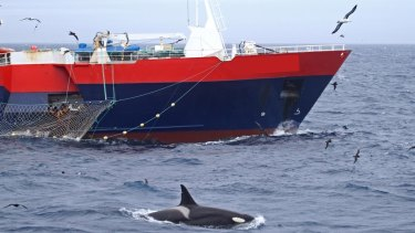 A whale shadowing a commercial fishing vessel off the Kerguelen and Crozet sub-Antarctic islands.
