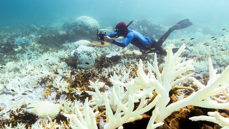 John Rumney from the Great Barrier Reef Legacy takes a close look at bleaching corals near Port Douglas.