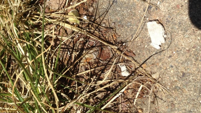 Fragments believed by neighbours to be asbestos on the footpath outside the Chifley property on Wednesday afternoon.