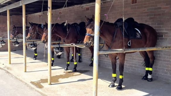 ATC disbands mounted security division after staff plead guilty to horse mistreatment charges