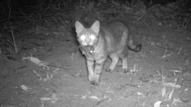 Residents are battling Brisbane City Council and Queensland Police over the management of feral cats in Coopers Plains