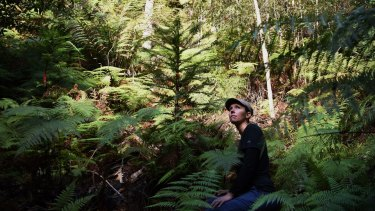 Dr Hiedi Zimmer in a secret grove of translocated Wollemi Pines.