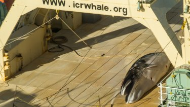 A Sea Shepherd helicopter tracking Japan's whaling fleet filmed this image.