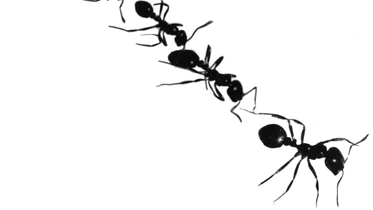 Ants may provide some of the answers that elude our best minds.
