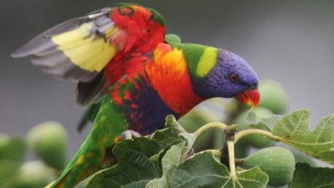 Misconception: Researchers have shown birds and plants aren't more colourful in the tropics.