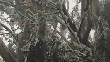 Cold conditions in the Bunya Mountains.