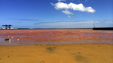 Foreshore Beach at Port Botany is Sydney's most polluted swimming spot.