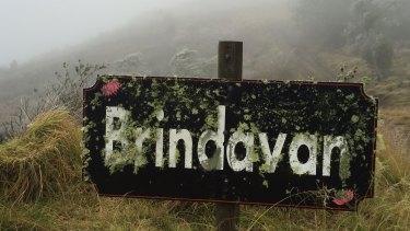 Brindavan on top of the Bunya Mountains. Not quite snow