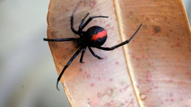 Many homeowners are disappointed to find spiders return to their property within a few weeks of spraying with insecticide.