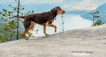 How a stray puppy rescued from a dump became a movie star