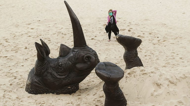 Sculpture by the Sea's Buried Rhino may live out his days at  Tamarama beach.