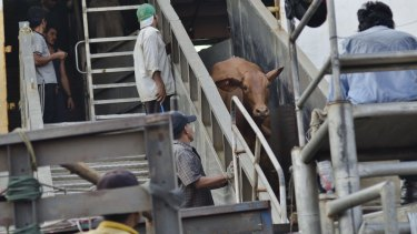 The cattle, from Darwin, are loaded for delivery in July 2013.