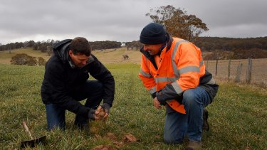 Agronomist with Australian Native Landscapes Roger Crisp and farmer Stuart Kelly check soil where biosolids have been used. Biosolids were not used on the paddock to the right.