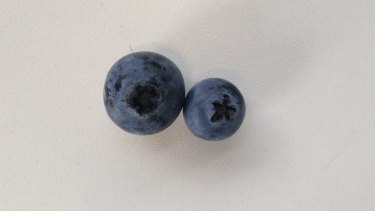 A 125 gram punnet containing 96 blueberries set us back $3.50. A 5c piece will get you close to 2 blueberries, which each cost 3.6c.
