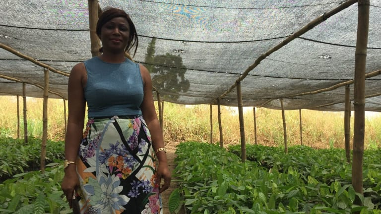 Agnes Amena Yao, director of the Cann co-operative, stands in a nursery of high-yielding cocoa plantlings.
