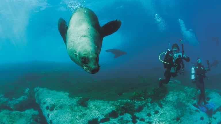Diving with seals at Montague Island.