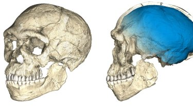 A composite reconstruction of early Homo sapiens fossils from Jebel Irhoud, based on microcomputed tomographic scans of multiple original fossils.