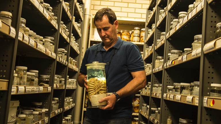 Stephen Keable, a senior researcher at the Australian Museum, with a giant sea lice specimen.