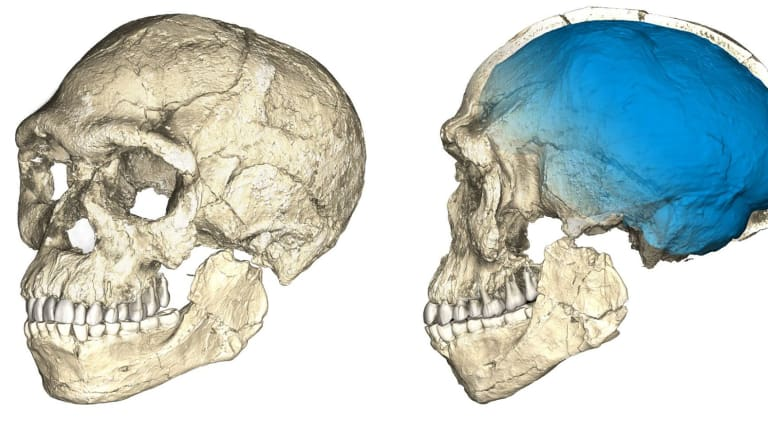 A composite reconstruction of the earliest known Homo sapiens fossils from Jebel Irhoud, based on microcomputed tomographic scans of multiple original fossils.