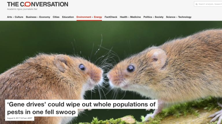 """""""I smelt a rat"""": A 2017 article on pest eradication using genetic technology on the website of <i>The Conversation</i>."""