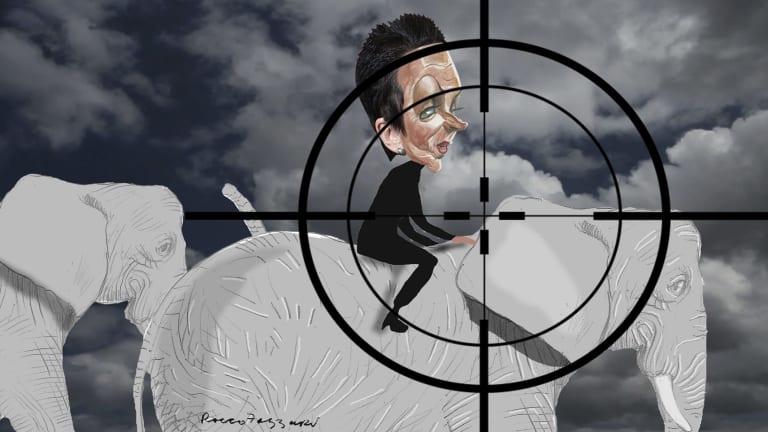 <i>Illustration: Rocco Fazzari</i>