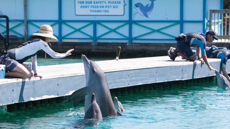 A dolphin enclosure at Sea World.