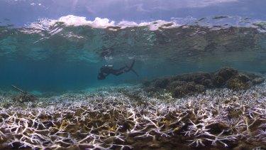 Bleaching on reefs in American Samoa.