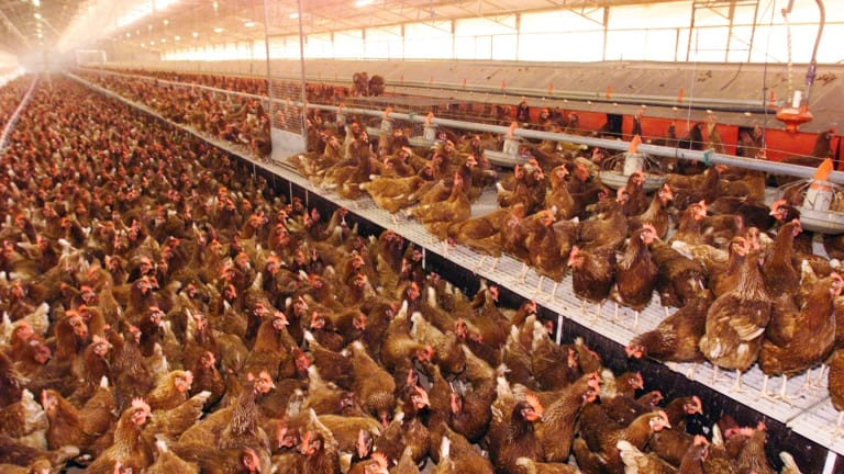 Barn-laid eggs are a relatively unpopular choice among shoppers.