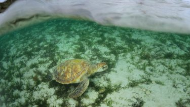 Seismic testing is a significant issue for marine life.