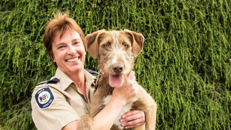 Former RSPCA ACT inspector Catherine Croatto has been awarded the inaugural Animal Defenders Office's animal protection award for 2017.