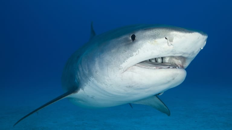 Sharks play a vital role in maintaining marine ecosystems.
