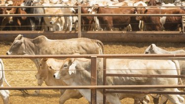 Chinese investors will be looking closely at the regulatory decisions over the Kidman cattle empire.